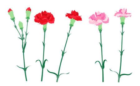 Illustration pour Illustration of red and pink carnations - image libre de droit