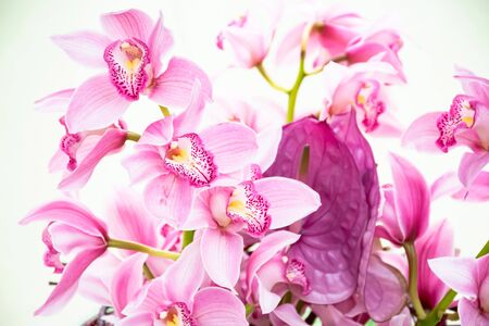 Photo pour Beautiful fresh bouquet magenta cymbidium orchids  sotft pink Lip, Tropical  sweet flowers growing in greenhouse in shining day, Wedding, anniversary,birthday and buisness import products concepts. - image libre de droit