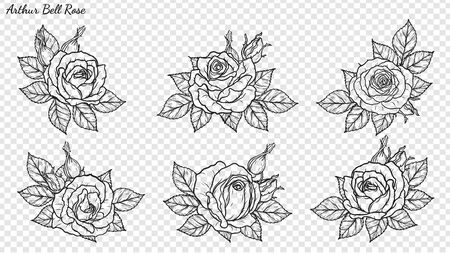Illustration pour Rose ornament vector by hand drawing. Beautiful flower on transparent background. Arthur Bell rose vector art highly detailed in line art style. Flower tattoo for paint or pattern. - image libre de droit