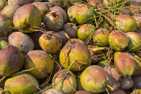 Pile of old coconuts on the ground