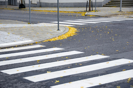 Foto per Fallen yellow maple leaves on pavement and crosswalk on a cold afternoon during fall/autumn - Immagine Royalty Free