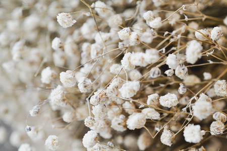 Small White Dried Flower Background In Vintage Style