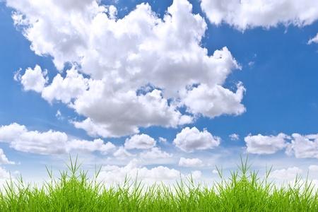 fresh spring green grass against blue sky