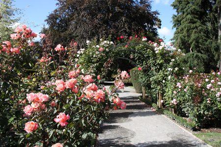Christchurch Botanic Gardens (New Zealand). Rose garden.
