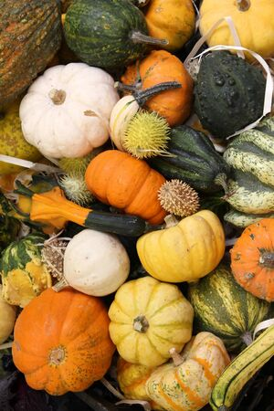 Autumn harvest at a market in Italy - various squashes and pumpkins including zucchini, yellow crookneck squash and cucurbita