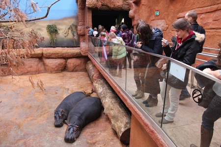 WROCLAW, POLAND - JANUARY 31, 2015: People visit Afrykarium in Wroclaw Zoo. Afrykarium is a newly built (2014) African pavilion with some 100 animal species.