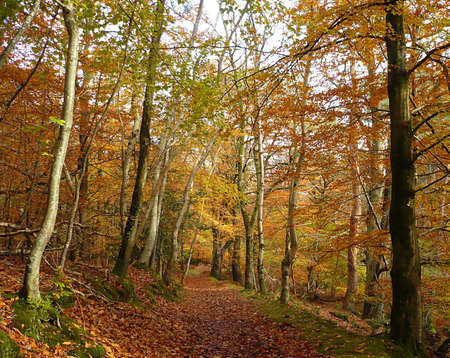 Walking through autumnal trees, Exmoor, South West England