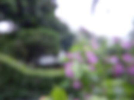 Totally Blur and Bokeh Leaf Photo, in the morning for background or other element design