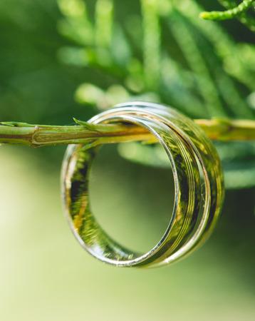 Foto de Wedding gold rings, on beautiful green plant - Imagen libre de derechos