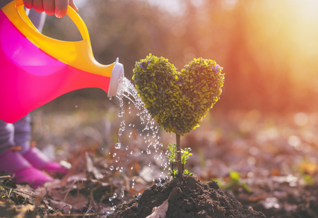 Photo for little girl planting a heart-shaped tree - Royalty Free Image