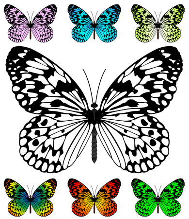 Ilustración de Butterfly vector template with samples. Easy editable wings color. Paper Kite and Rice Paper butterfly, Idea Leuconoe species. - Imagen libre de derechos