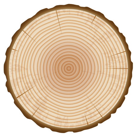 Illustration pour Tree Trunk Annual Rings Section Isolated on White Background. Wood Slice Design Element. Vector Illustration. - image libre de droit
