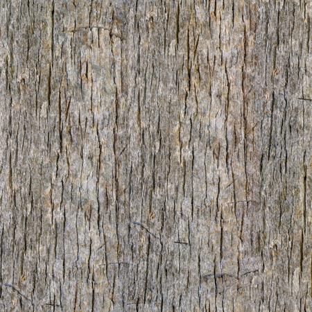 Foto de Seamless Palm Tree Bark Background. Tileable Trunk Texture of the Old Palm Tree. - Imagen libre de derechos