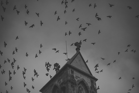 dark birds fly on cloudy sky near top of gothic castle. Medieval architecture, dramatic sight, classy style concept.