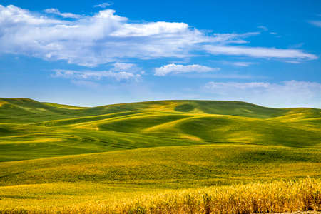 Photo for Summer blue skies over rolling fields of argricuture fields in eastern Washington State in the Palouse region - Royalty Free Image
