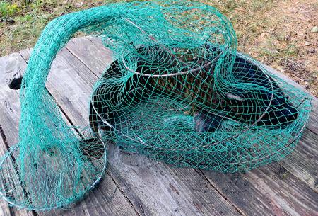 Night fishing catch carp weighing 5,5kg - Ukraine, Rivne region  /Fish catch/