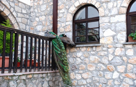 Peacock on a wooden fence and stone wall background  Monastery of Saint Naum Ohridski