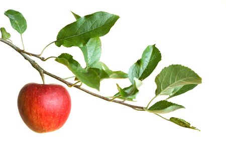 Photo pour apple on a branch isolated on a white background - image libre de droit