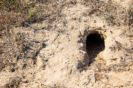 Hole of an unknown animal in the steppe on the ground