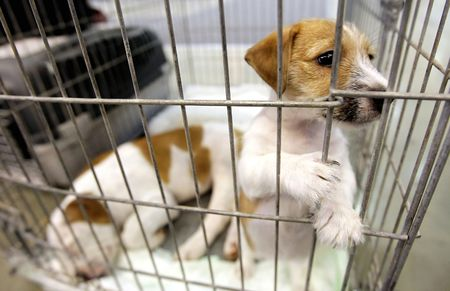 puppy looks through his cage awaiting adoption