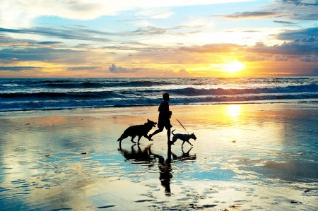 Man with a dogs running on the beach at sunset  Bali island, Indonesia
