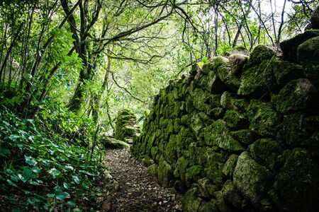 Enchanted Forest in Sintra, Portugal
