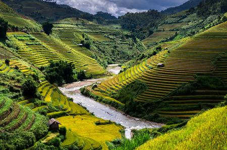 Rice fields on terraced of Mu Cang Chai District, YenBai province, Northwest Vietnam