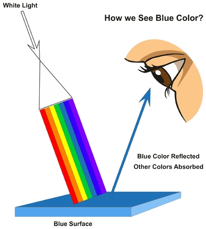Illustration pour How we See Blue Color infographic diagram showing visible spectrum light on surface and colors reflected or absorbed according to its color for physics science education - image libre de droit
