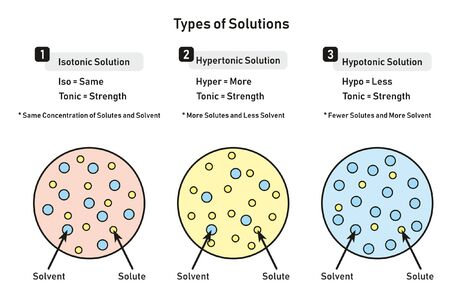 Illustration pour Types of Solutions infographic diagram including isotonic hypertonic hypotonic and relation between solute and solvent for chemistry science education - image libre de droit