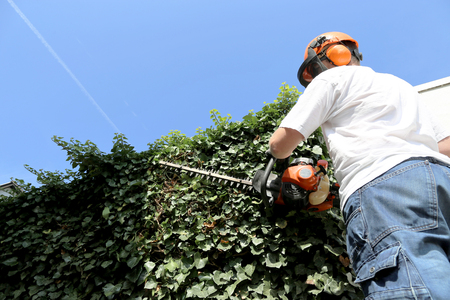 Photo pour Horticulture: Pruning and cutting hedges with chainsaw - image libre de droit