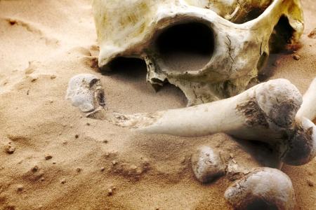 skull and bones on desert