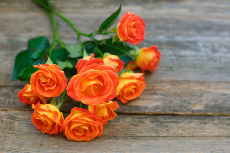 Photo for Background of a bouquet of beautiful fresh vivid orange roses tinged with red for celebrating Valentine's, an anniversary, birthday or Mothers Day on wooden background, copy space - Royalty Free Image