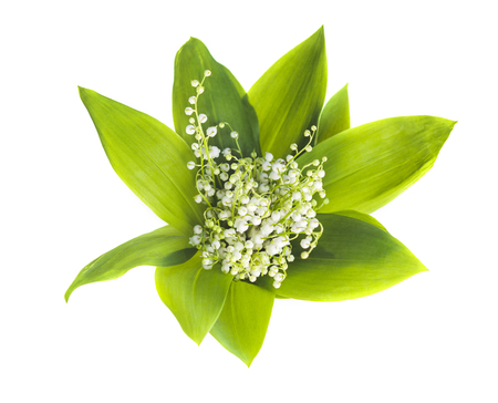 Photo pour Bouquet of lilies of the valley on white background. View from above - image libre de droit