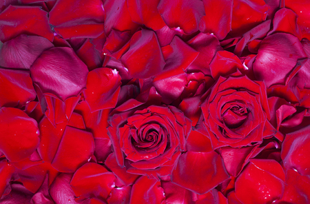 Photo for Natural background of fresh red rose petals - Royalty Free Image