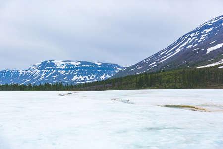 Photo pour Snow and fir trees. Polar day on Putorana Plateau, Taimyr, Russia - image libre de droit