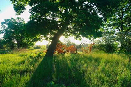 Photo pour Sunny morning in a forest glade. - image libre de droit