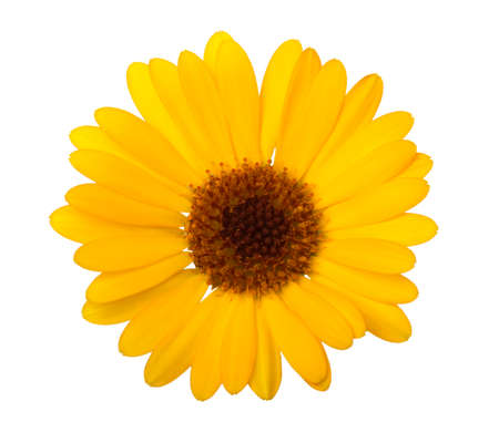 Photo pour Calendula. Marigold flower with leaves isolated on white. Selective focus - image libre de droit