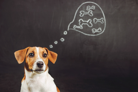 Photo pour Puppy dog sitting and dreaming of natural food in a thought bubble near blackboard. - image libre de droit
