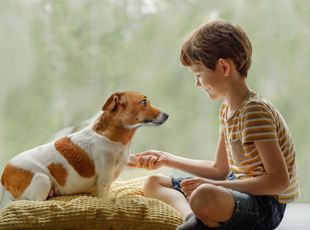 Foto de Cute dog looks into the eyes and gives the paw to the child. Friendship, animal protection concept. - Imagen libre de derechos