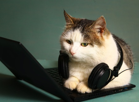 funny picture of cat lay on copmuter laptop with headphones
