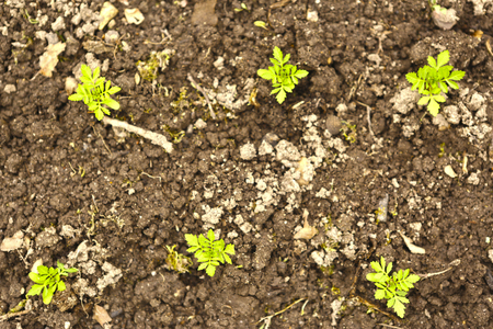 spring sprouts in soil close up photo