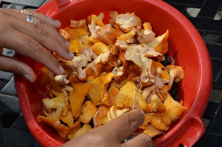 Clean, Prepare Mushrooms