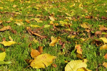 Autumn leaves lying in the grass - Herbstlaub im Gras liegend