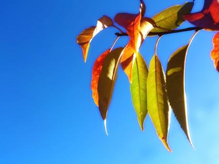 Autumn leaves under a deep blue sky