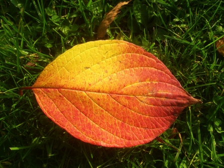 Autumn leaves lying in the sun on green gras