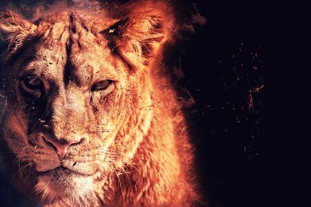 Photo pour lioness energy - image libre de droit