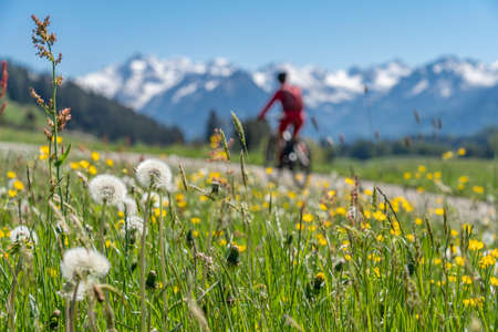 Photo pour pretty senior woman riding her electric mountain on warm spring day with snoe capped bike in the Iller valley near Oberstdorf with snoe capped Allgau High Alps in background, Allgau Alps, Bavaria, - image libre de droit