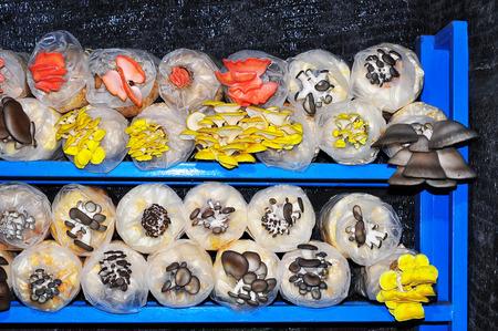 Eatable Cultured Mushroom ~ Soft Focus