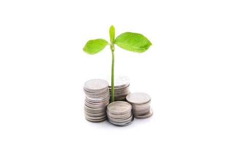 Stacks Of Coins And A Small Plant Sprouting From There Over White Background - Profitable Saving Concept