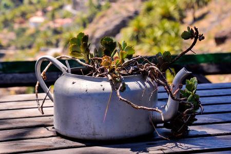 Photo Picture of a Strange Unusual Plant Pot